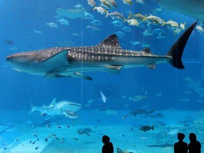 4 Dubai aquarium and Underwater Zoo 4