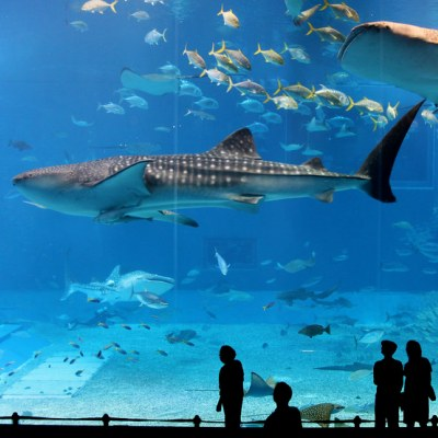 4 Dubai aquarium and Underwater Zoo 4